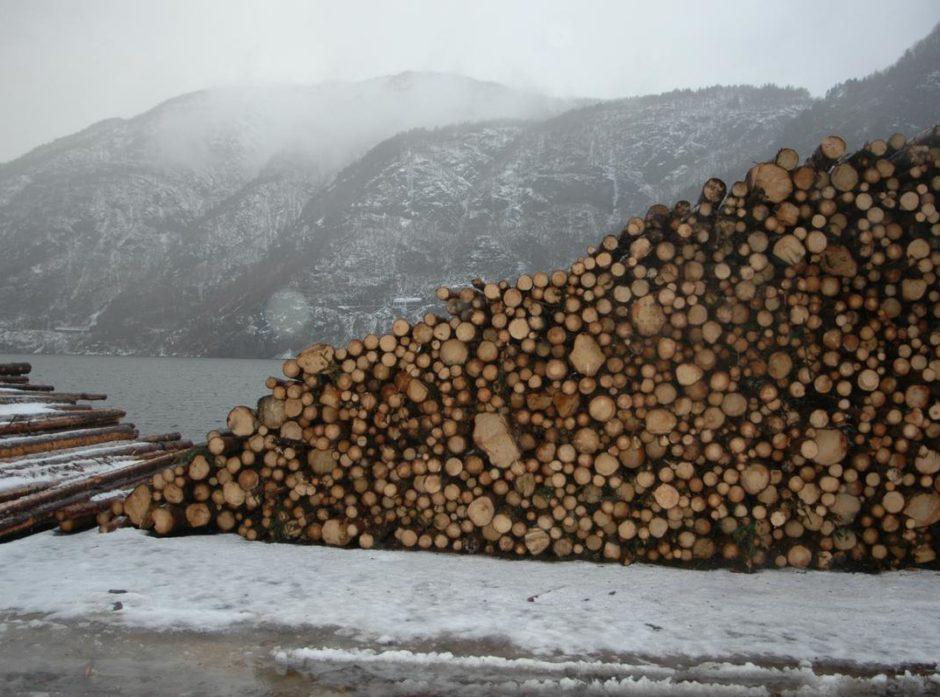 Tømmer ved kai. Foto: Anders Hals