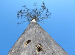 Skogbildet og de utelatte linjene