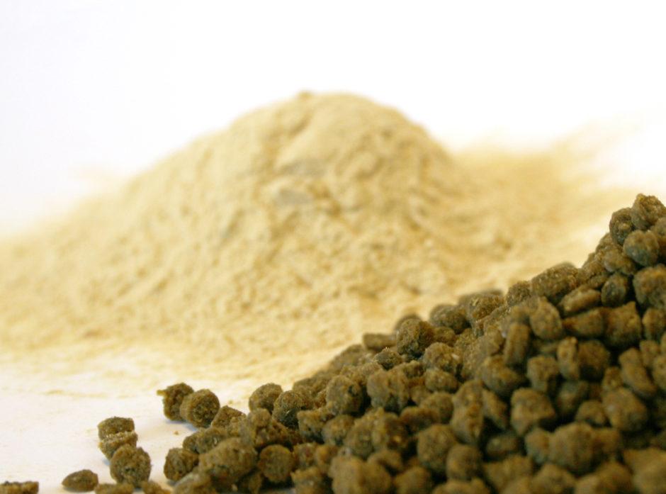 Gjær laget på cellulose er 2. generasjons bioressurs. Det betyr at det ikke er benyttet dyrket mark i produksjonen. Gjæren inngår som proteinkilde. Gjæren kan brukes i dyre- og fiskefor. Foto: Janne Karin Brodin.