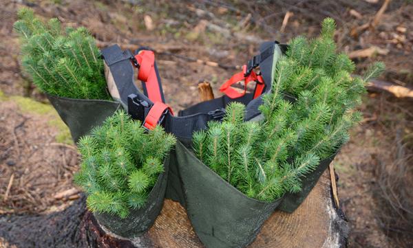 Norske skogplanteskoler leverte omlag 40,2 millioner planter i 2018. Foto: Anders Hals