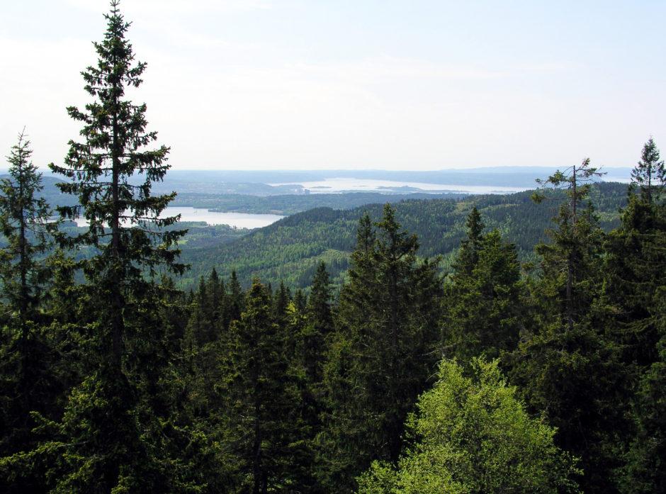 Illustrasjonsbilde skog