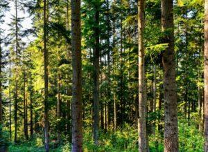 Midler til skogbruk over Landbrukets utviklingsfond for 2021