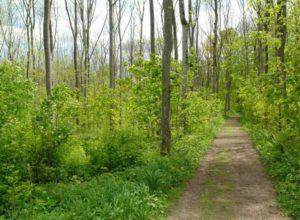 Skal sikre variasjon i norsk skog