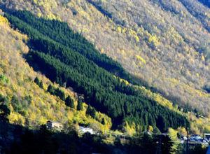 Skogbruk i rasutsatte strøk