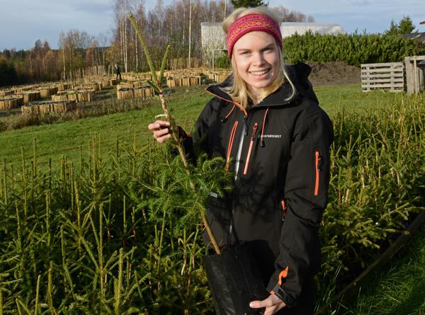 Birgit Sundbø Hagalid har funnet drømmejobben i Skogfrøverket. Her viser hun fram planter som skal bidra til å sikre at framtidsskogen blir mer robust og klimatlipasset.