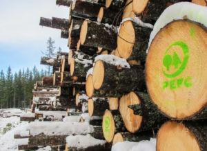 Det er bra for klimaet å bruke skogen
