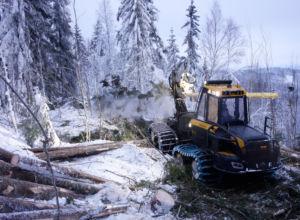 Åpen konkurranse om landets største skogoppdrag