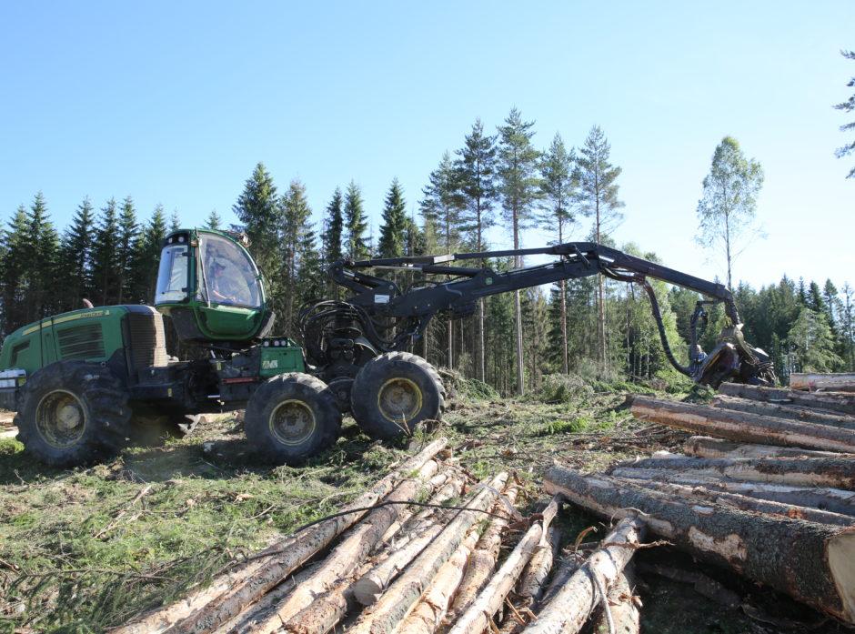 Glommen mener skogbruk er inne i en langsiktig, positiv trend, og vil sikre seg tømmer til høsten.