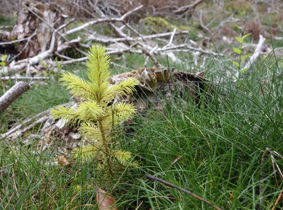 Tallene fra SSB viser at det plantes stadig mer skog. Foto: Roar Ree Kirkevold