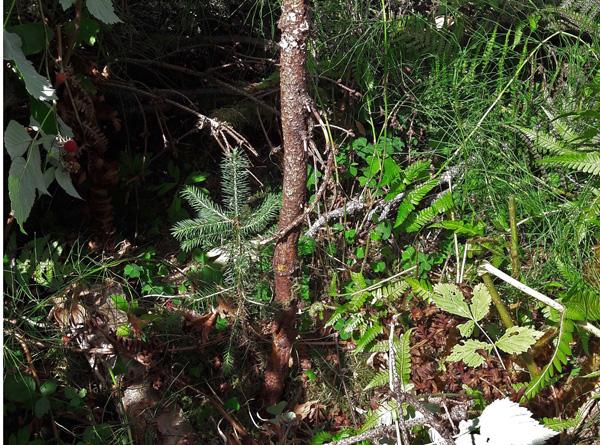 Slik bør det gjerne se ut rundt en nyplantet plante om høsten.