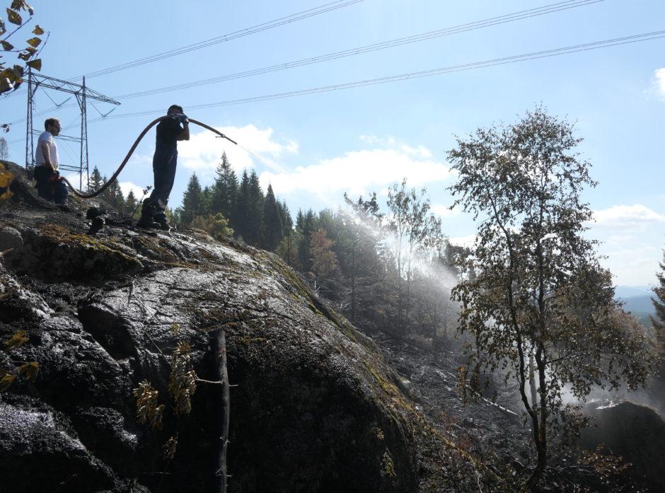 Den ekstreme tørken satte sine spor også i skogen i fjor.