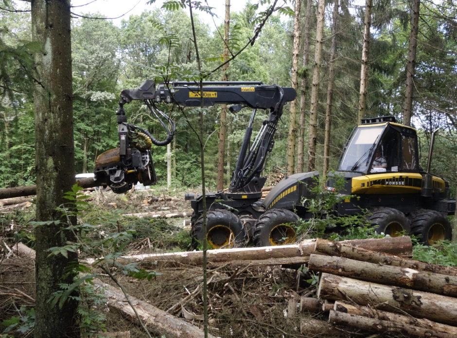 Det ble hogget på cirka 11 prosent av skogeiendommene i fjor. Foto: Roar Ree Kirkevold.