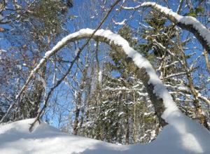 Redd skogen fra snøbrekk