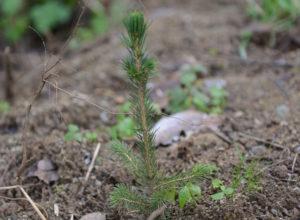 Skogplanting gir god klimaeffekt