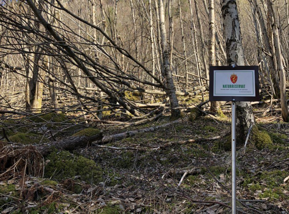 Nye skogområder er vernet som naturreservat. Foto: Ida Aarø