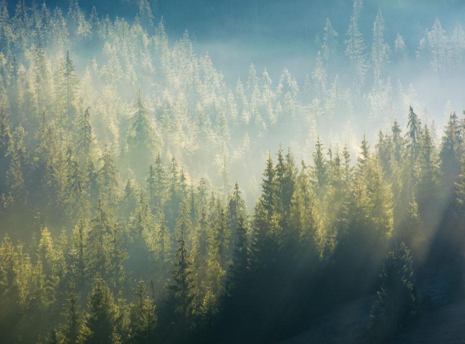 Skogen er viktig for å regulere klimaet på jorda. Foto: Colourbox