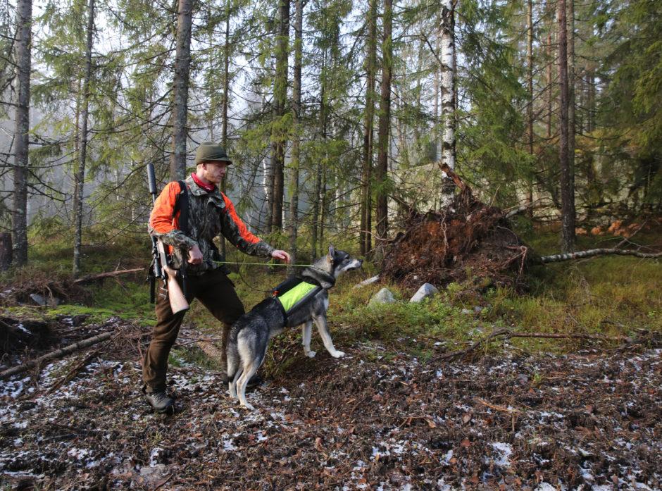 Vi har en forholdsvis stabil jegerstand. Jaktåret 18/19 dro 139 770 jegere til skogs eller til fjells.