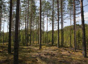 I skogen vokser 11 milliarder klimaløsninger