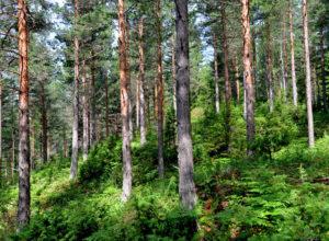 Hva betyr naturtype-kartlegging for skogeier?