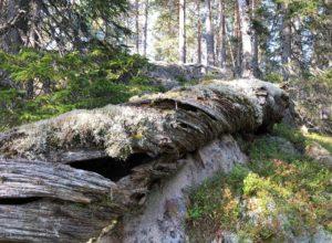 Halvveis til Stortingets mål om 10 prosent skogvern