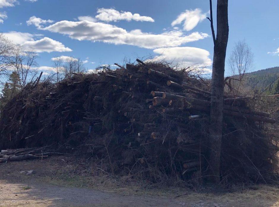 Mange av tiltakene i Klimakur 2030 baserer seg på økt bruk av rester og avfall fra skogindustrien, som blant annet GROT. Foto: Ida Aarø