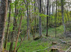Øremerkede midler til miljøtiltak i skog