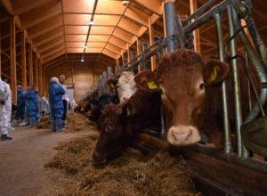 Webinar om landbruksbygg i tre