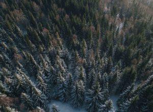 Lite skogskader i 2020