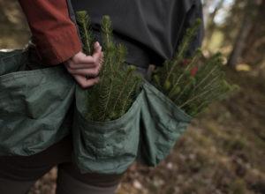 Stortinget støtter skogplanting