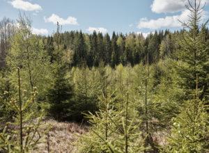 Skog i skattemeldingen