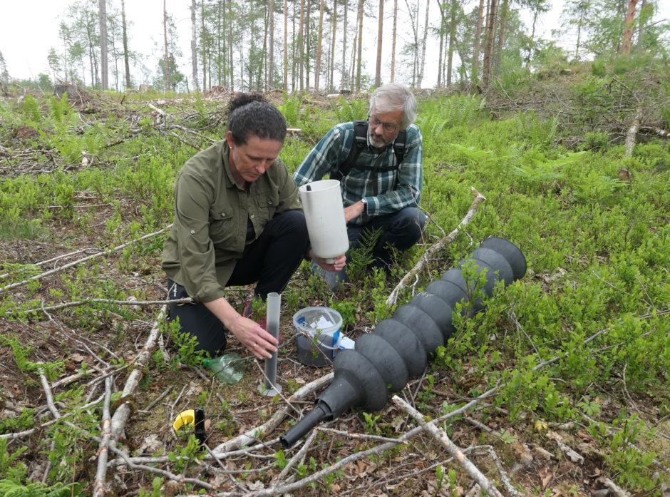 Her tømmer rådgiver ved landbrukskontoret i Tønsberg, Berit Nordby Pettersen, en felle i Re som hadde 42 000 barkbiller. Aldri før har hun vært i nærheten av et så stort antall, og blir sommeren tørr, varm og lang, kan det se stygt ut i flere områder på Østlandet. Til høyre: Svein Solberg fra NIBIO. Foto: Roar Ree Kirkevold