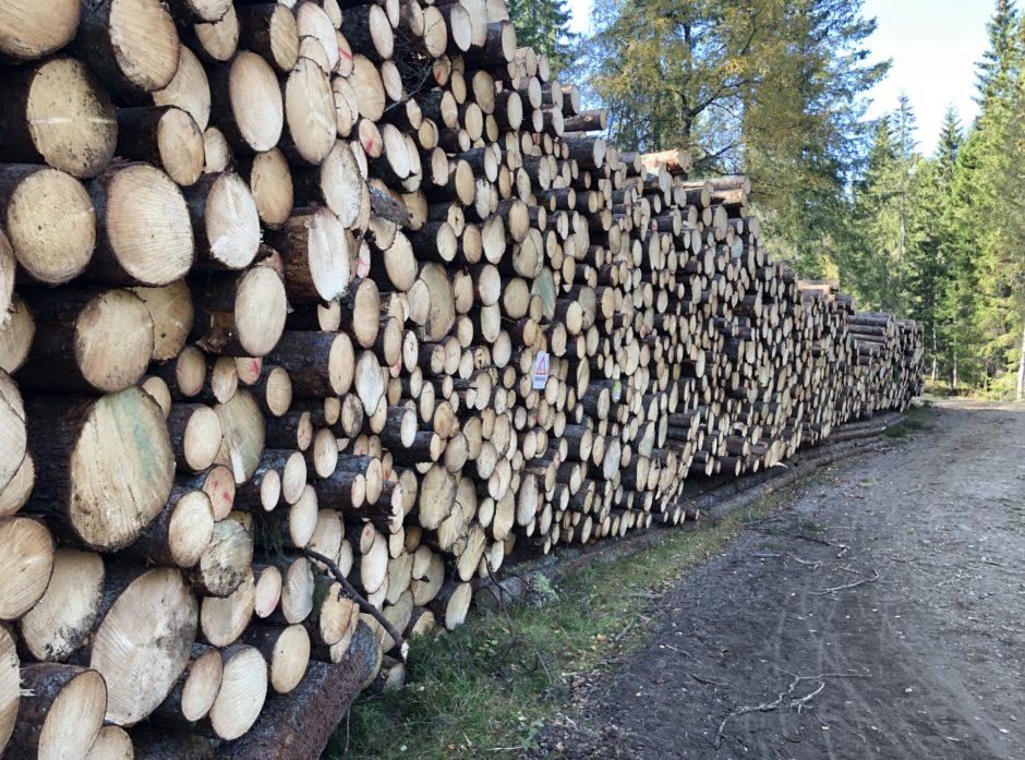 Skogeierforbundet er bekymret for at nytt klimaregelverk kan begrense hogstnivået i Norge. Foto: Ida Aarø