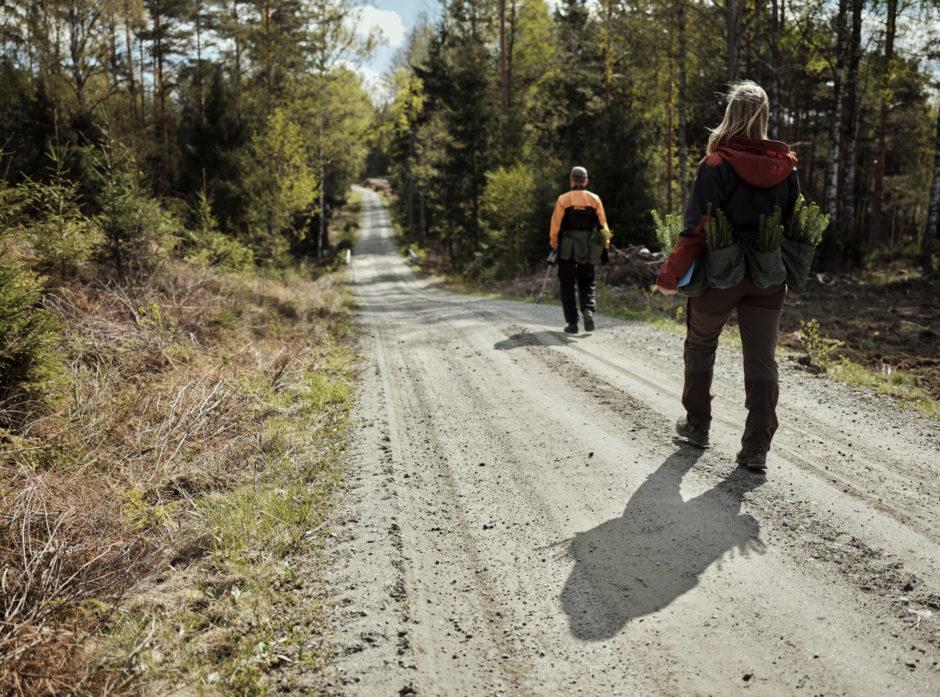 Praktisk talt hele det norske skogbruket er miljøsertifisert. Her er skogeier på vei ut for å plante etter hogst.
